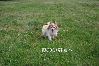DSC_3717 ブログ