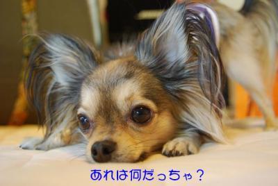 DSC_4055 ブログ