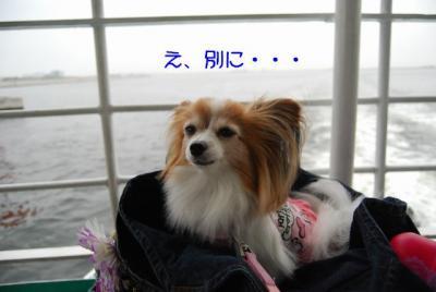 DSC_4219ブログ