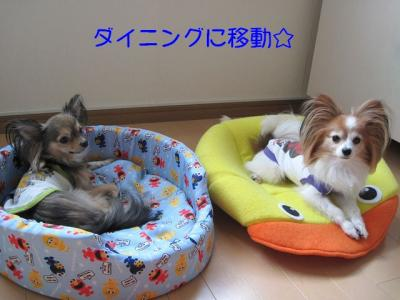 IMG_2304 ブログ