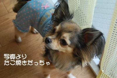 DSC_4421 ブログ
