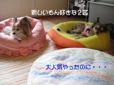 IMG_2392 ブログ
