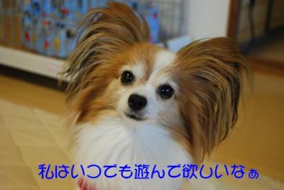 DSC_4620 ブログ