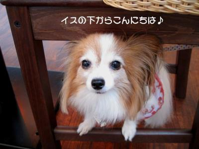 IMG_2441 ブログ