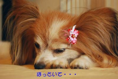 DSC_4678 ブログ