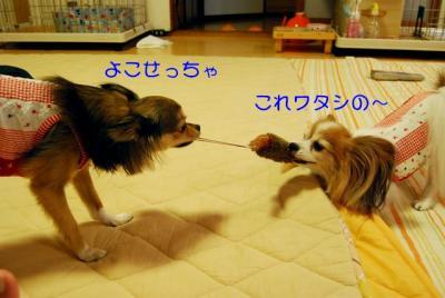 DSC_5377 ブログ