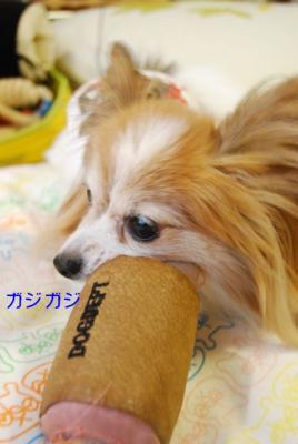 DSC_5645 ブログ