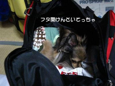IMG_2729 ブログ