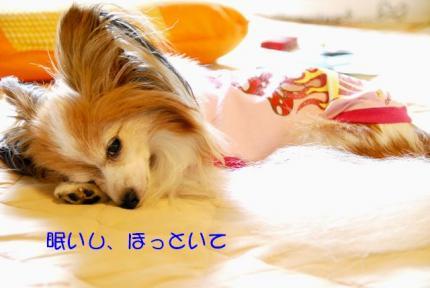 DSC_8322 ブログ