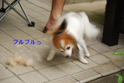 DSC_8364 ブログ