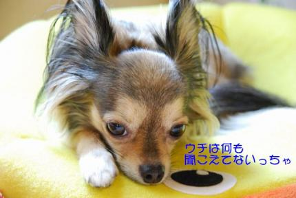 DSC_8677 ブログ