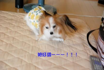 DSC_0621 ブログ