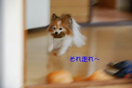 DSC_0723 ブログ
