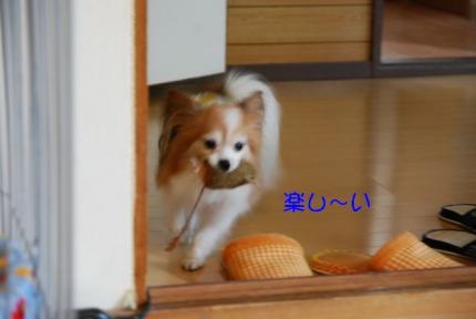 DSC_0724 ブログ
