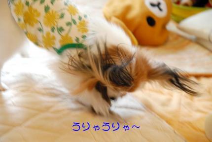 DSC_0720 ブログ