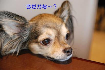 DSC_0823 ブログ