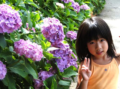 紫陽花リリカ