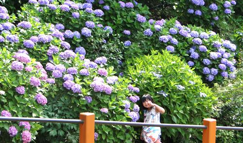 紫陽花ルナ