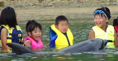 イルカ 触合