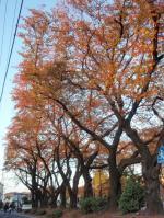 ida-sakuradai-2.jpg