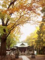 kosugi-1.jpg