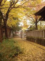 kosugi-3.jpg