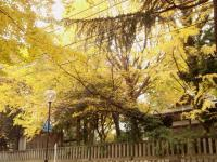 kosugi-4.jpg