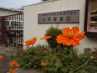 kosumo1.jpg