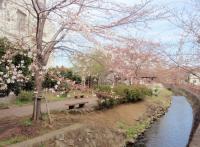 nika-yosino-1.jpg