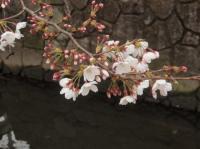 nika-yosino-3.jpg