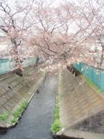 nika-yosino-6.jpg