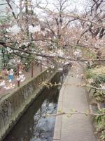 nika-yosino-7.jpg