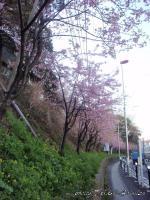 titosesakura-5s.jpg