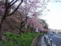 titosesakura-6s.jpg