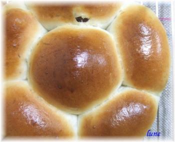 ぶどうくるみパン1