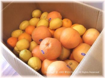 レモン商品