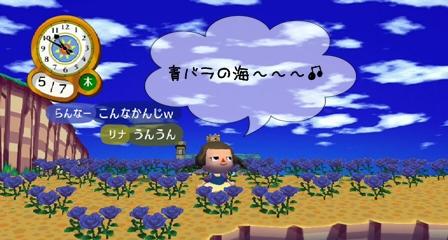 青バラの海~~♪