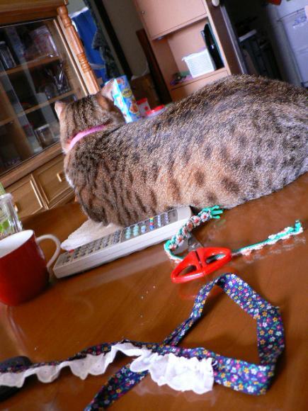 2007年9月6日猫首輪試作品一号