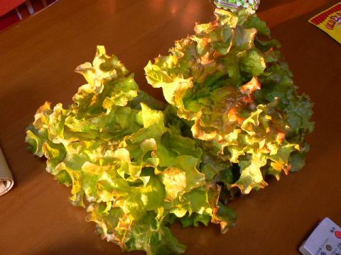 2007年11月14日収穫野菜