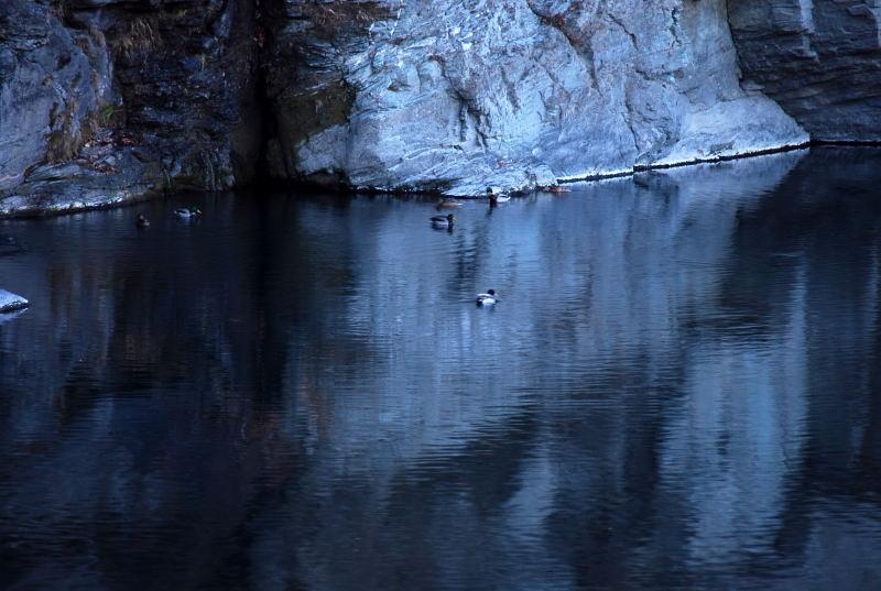 赤壁に佇む鴨