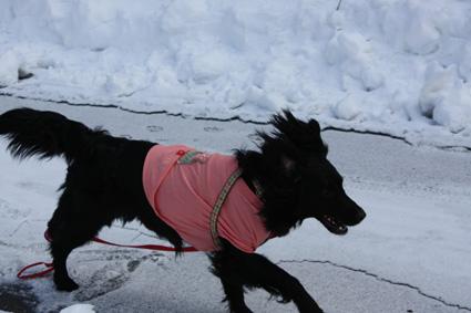 ダッシュ 雪2
