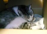 うちの猫:お手入れ中