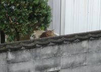 ある日の猫3