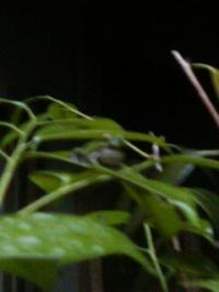 blog 2009.5.16 5