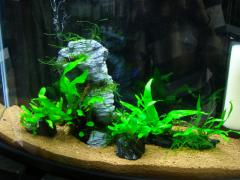 京葉熱帯魚16