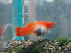 京葉熱帯魚2