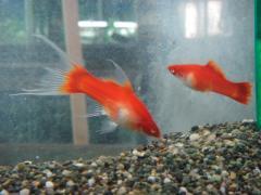 京葉熱帯魚3