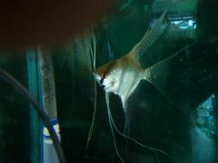 京葉熱帯魚4