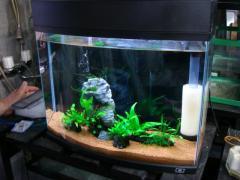 京葉熱帯魚6