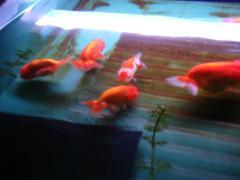 京葉熱帯魚9